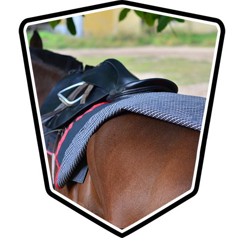 Gallop Racing Equipment & Accessories